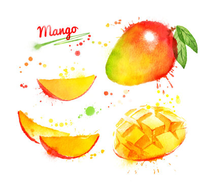 Watercolor illustration of mango