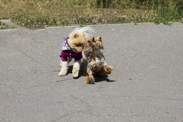 Two playing puppies