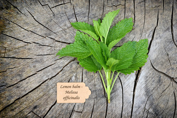 Melissa officinalis, balm on old wooden background.