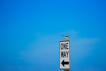 Mockingbird on one way sign