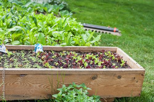 Kleine Flache Hochbeete Mit Salat Stockfotos Und Lizenzfreie Bilder