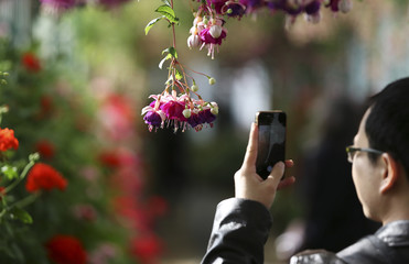 A visitor takes a photograph of a Fuschia flower inside the greenhouses on the grounds of the Belgian royal family residence of Laeken in Brussels