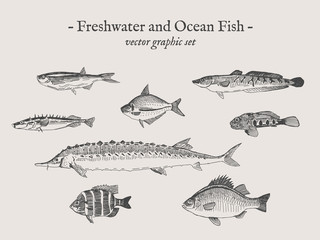 Freshwater and Ocean fish vintage vector illustration drawings set