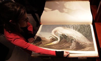 """A Sotheby's employee turns a page of  John James Audubon's """"Birds of America"""", at Sotheby's in London"""