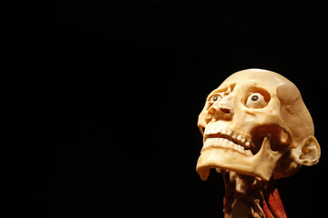 """Plastinated human body, part of """"The Human Body"""" exhibition, is seen during a media tour at Antipa Museum in Bucharest"""