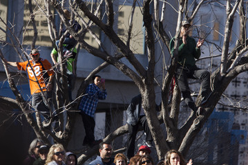 Fans sit on tree limbs along the parade route to get a view of Holly Holm during a parade honoring the UFC Bantamweight champion in Albuquerque