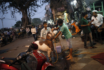 Boys wash their pet goat next to motorcycle spare parts shops in the old quarters of Delhi