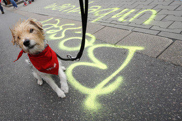 A dog sports a red scarf with Verdi union logo during a strike in Frankfurt airport