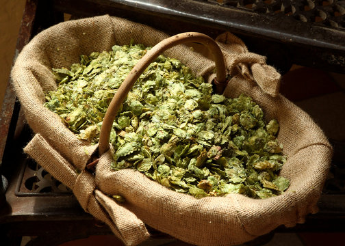 File photo of a basket of hops in a brewery in the Upper Austrian town of Sankt Martin im Innkreis