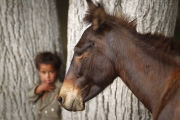 A horse is seen next to a boy standing outside his makeshift residence near Dal Lake in Srinagar