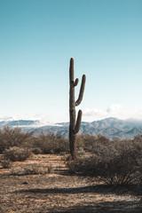 Photo sur Aluminium Cactus Saguaro Cactus in Scottsdale