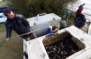 A worker loads young pike into a barrel to be released into a lake during lake stocking by Belarusian Society of Hunters and Fishermen on the outskirts of Minsk