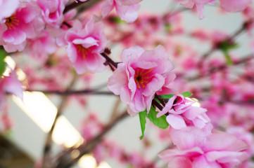 Spring pink plastic sakura flower decorating