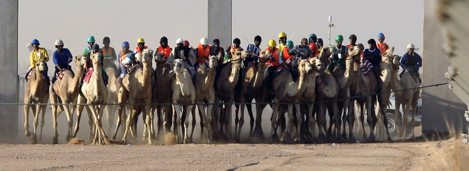 Camels race during the 25th Janadriya festival on the outskirts of Riyadh