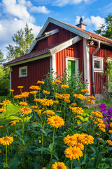 Garden flowers and a red cottage