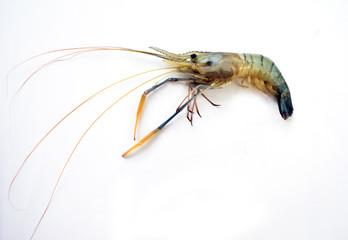 Fresh prawn on White Isolated Background