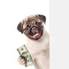 Dog peeking from behind empty board and holding money. isolated on white background