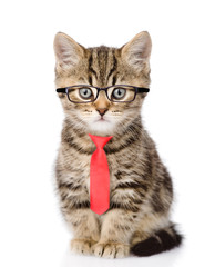 Tabby cat wearing glasses and a red tie. isolated on white background