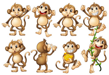 Brown monkeys in different actions