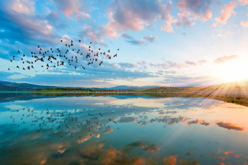 Printed roller blinds Bird birds silhouettes flying above the lake against sunset,