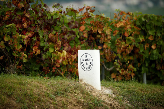 A stone marker shows the logo of the Moet & Chandon Champagne house in Hautvillers, eastern France during the traditional Champagne wine harvest