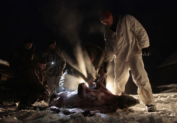 Belarussian hunters skin a wild boar after hunting in a forest near the town of Vileika