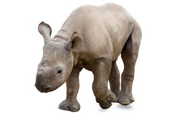 Spoed Fotobehang Neushoorn Baby rhinoceros on white