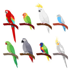 Tropical Parrot Set Isolated on White Background. Vector illustration
