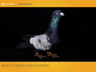 The Wider Image: Beauty, money and feathers