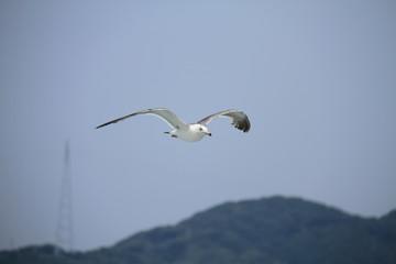Sea gull flys on the sea