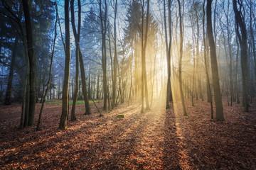 Sonnenaufgang im Nationalpark Kellerwald