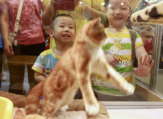 Children smile while watching a kitten play at the 2013 Taipei Pet Show in Taipei