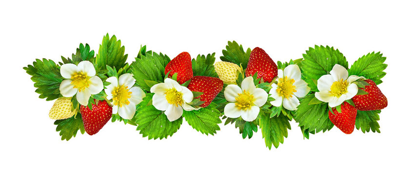 Strawberries border with flowers, berries and leaves