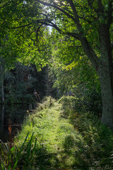 Idyllic path with sunlight and trees at bright summer day