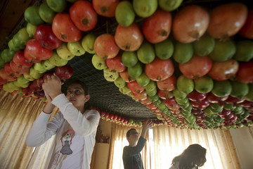 Members of the Samaritan sect decorate a traditional hut known as a sukkah with fruits and vegetables on Mount Gerizim, on the outskirts of Nablus