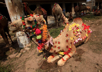 A camel for sale decorated with artificial flowers and henna patterns is seen at a makeshift cattle market ahead of the Eid al-Adha festival in Peshawar