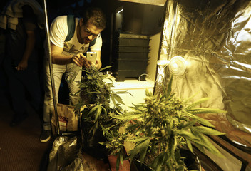 """A man takes pictures of a cannabis plant displayed during the first """"Expo Cannabis"""" fair in Montevideo"""