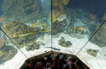 Children look at fish in a saltwater aquarium at Aqua Terra Zoo in Vienna