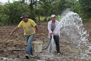 A farmer, who is a member of a women's group affiliated to the Juan Francisco Paz Silva Cooperative, works with her husband on a cornfield at Achuapa town