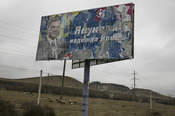 Sheep graze next to an old election sign on a road from Simferopol to Sevastopol
