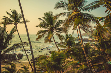 Palm trees in the rays of the sunset in the background beach and the Arabian Sea