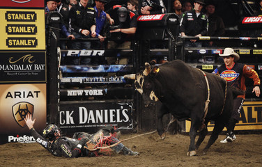 Cowboy Sean Willingham looks up after falling off the bull Dippin during the Professional Bull Riders (PBR) Madison Square Garden Invitational in New York