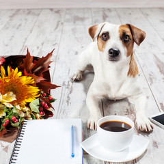 Dog with notebook, phone and coffee