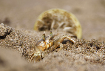 Crab digs at sand beach in the port city of Sidon