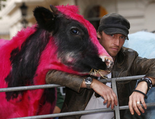 Artist Mark Evans poses for a photograph with a cow called George, which has been dyed pink, in a pen for the opening of an exhibition called Furious Affection by Evans, in central London