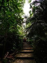 石垣島の自然