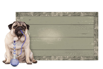 cute pug puppy dog smoking shisha water pipe, sitting next to vintage wooden sign, isolated on white background
