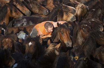 "A reveller tries to hold on to a wild horse during the ""Rapa Das Bestas"" traditional event in the Spanish northwestern village of Sabucedo"