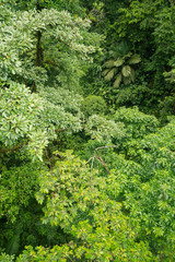 Lush rainforest canopy view
