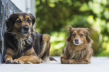 Two dogs lying in the yard